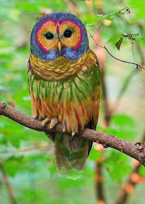 Regenbogeneule